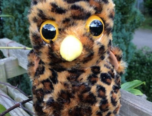 Owl soft toy flies in ahead of his book!